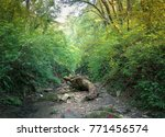 autumn forest in the mountains... | Shutterstock . vector #771456574