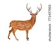 Fallow Deer Buck. Vector...