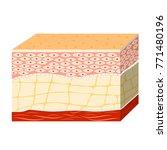 anatomy of the human skin | Shutterstock . vector #771480196