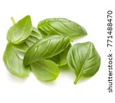 sweet basil herb leaves handful ... | Shutterstock . vector #771488470