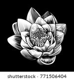 a lotus water lily flower in a... | Shutterstock .eps vector #771506404