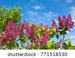 Beautiful Fresh Purple Violet...