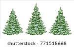 firs. set of beautiful...   Shutterstock .eps vector #771518668
