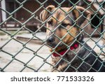 abandoned puppy in an animal... | Shutterstock . vector #771533326