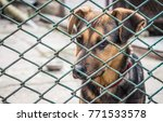 Small photo of Homeless puppy in an animal shelter