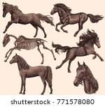 horses design set hand drawn