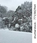 Small photo of Snow accumulation on tree branches, first blizzard of winter season