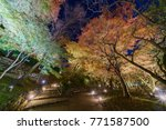 beautiful night fall color of... | Shutterstock . vector #771587500