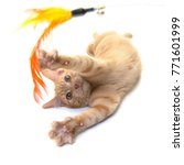 Stock photo red ginger cat playing with a feather toy 771601999
