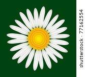 camomile flower isolated ... | Shutterstock .eps vector #77162554