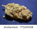 amnesia haze is a sativa... | Shutterstock . vector #771639208