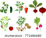 set of different vegetable... | Shutterstock .eps vector #771686680