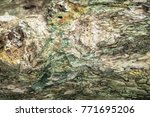 embossed texture of the bark of ... | Shutterstock . vector #771695206
