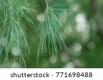 close view of sea oaks leaves | Shutterstock . vector #771698488