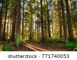 sunrays filtering thru the... | Shutterstock . vector #771740053