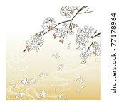 cherry blossom    Shutterstock .eps vector #77178964