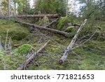 nature management area in an... | Shutterstock . vector #771821653