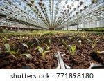 st. petersburg  russia   april...   Shutterstock . vector #771898180
