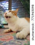 A White And Orange Cat Sitting...