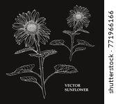 elegant hand drawn decorative... | Shutterstock .eps vector #771966166