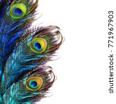 Bright Peacock Feather.