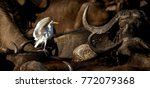a cattle egret amidst a sea of... | Shutterstock . vector #772079368