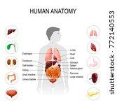 human anatomy. medical poster...   Shutterstock . vector #772140553
