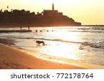 dog is running  on the  beach   ... | Shutterstock . vector #772178764