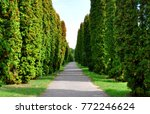 asphalt path with trees growing ...   Shutterstock . vector #772246624