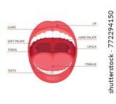 vector illustration of a ...   Shutterstock .eps vector #772294150
