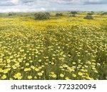 carrizo plain national monument ...   Shutterstock . vector #772320094