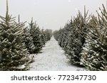 Long Row Of Christmas Trees On...