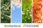 four seasons of year.... | Shutterstock . vector #772421668