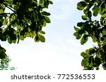 green leaves foreground | Shutterstock . vector #772536553