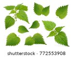 Nettle Leaves Isolated On Whit...