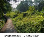 concrete road in the forest | Shutterstock . vector #772597534