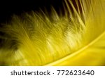 Close Up Yellow Feather Agains...