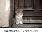 Stock photo kitten red white cymric sitting in doorway almost closed door 772671394