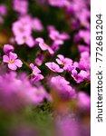 beautiful spring flowers | Shutterstock . vector #772681204