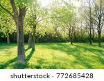 sunlight in the green forest... | Shutterstock . vector #772685428