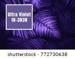 beautiful fern leaves green... | Shutterstock . vector #772730638