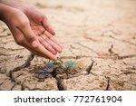 hands of boy watering little... | Shutterstock . vector #772761904