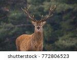 Noble Red Deer  Cervidae ...