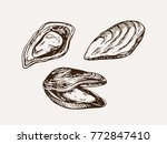 set of mussels hand drawn... | Shutterstock .eps vector #772847410