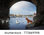 a dog in a boat under a bridge... | Shutterstock . vector #772869598