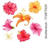 set of vector illustrations of... | Shutterstock .eps vector #772877029