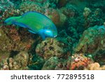 parrotfish  shark feed dive... | Shutterstock . vector #772895518