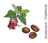 vector sketch hand drawn coffee ... | Shutterstock .eps vector #772899130