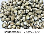 Small photo of fresh cockles for sale at a market, Cardiidae