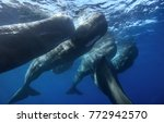 family of spermwhales... | Shutterstock . vector #772942570